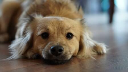 Urlaub Mit Hund Unterkünfte Für Hund Und Herrchen